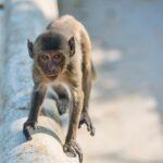 The Monkeys in Prachuap Khiri Khan