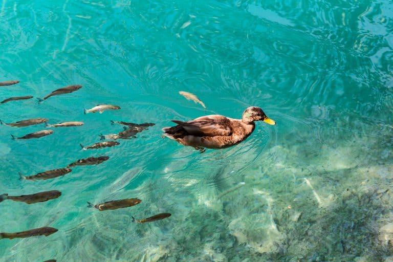 Summer Trip 2016 Part 15 – Croatia – Plitvice Lakes National Park