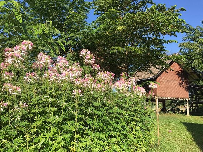 Flower Power at Twin Hut