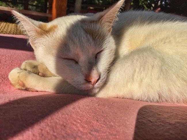 Cat sleeps