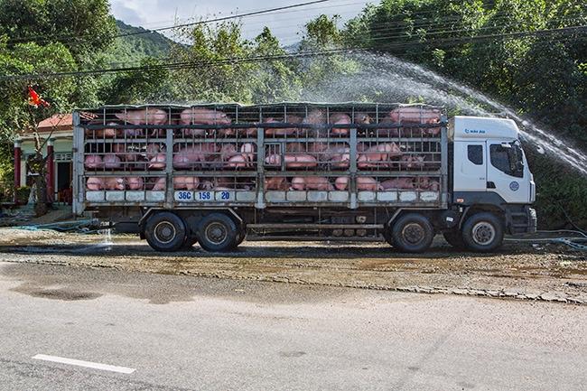 Pig cooling station