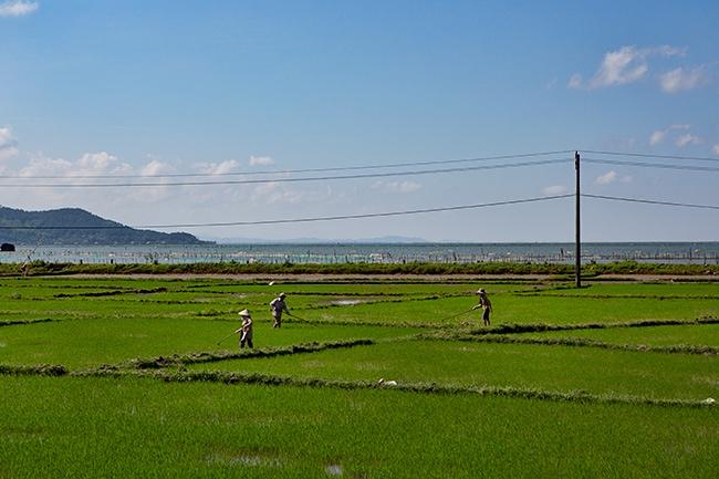 Ricefield in Quỹ Nhất