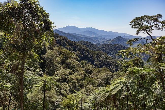 Magic mountain wonderland