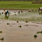From Phố Châu over Rừng Thông to Ninh Binh