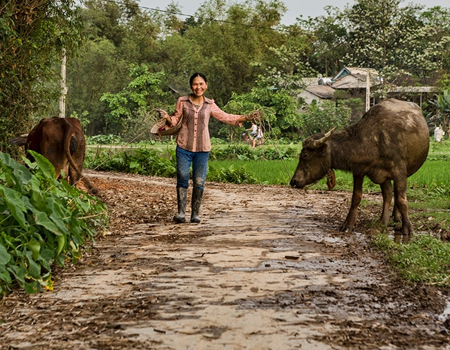 Bringing home the buffalo