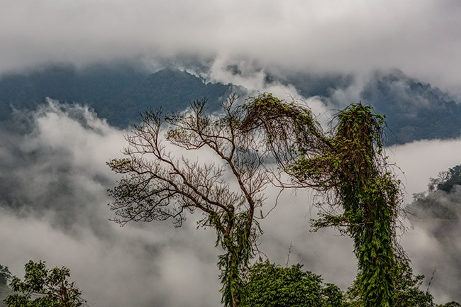 Rainforest somewhere between Phong Nha and Phố Châu close to Xã Hướng Lập