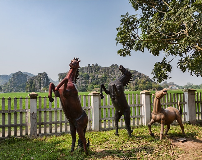 Wild Horses - why here??