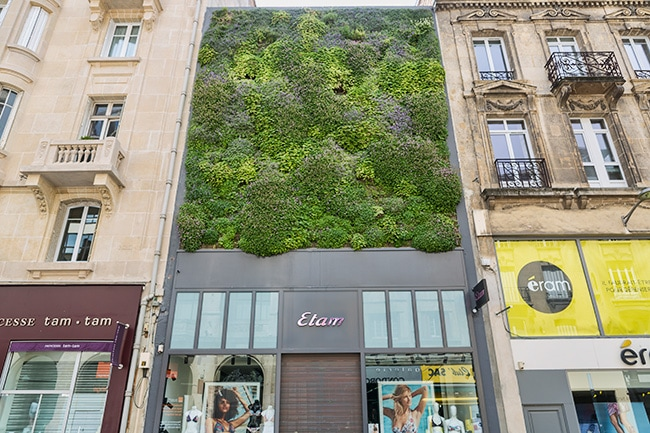 A living wall