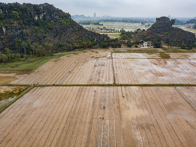 Rice planting season