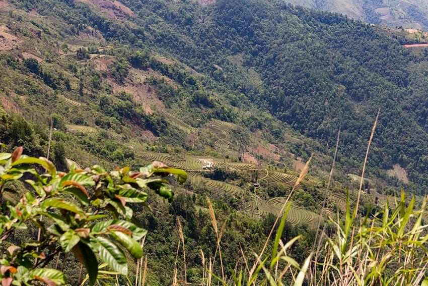 Mountain Rice Fields