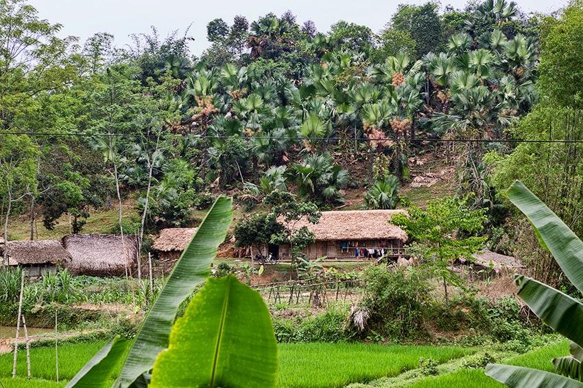 Farmer Houses