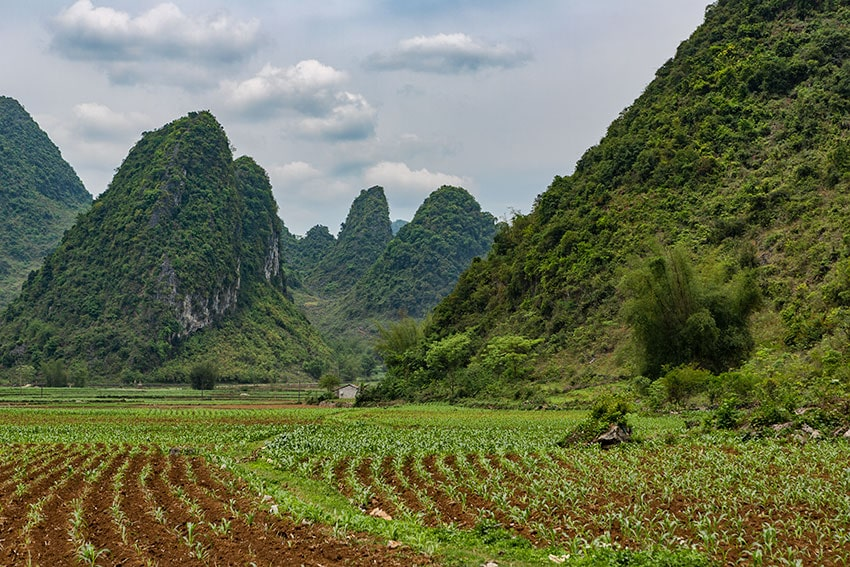 Corn fields with Karst mountains in the bag