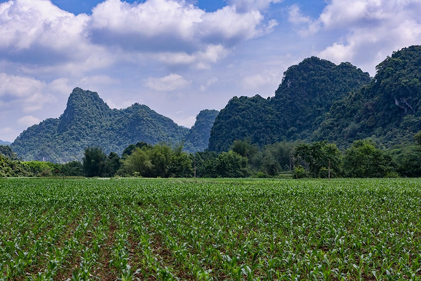 Corn Field and Karst Mountain