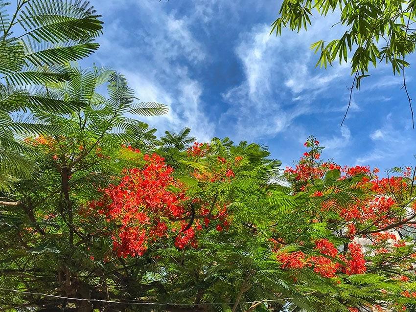 Flowers in a tree