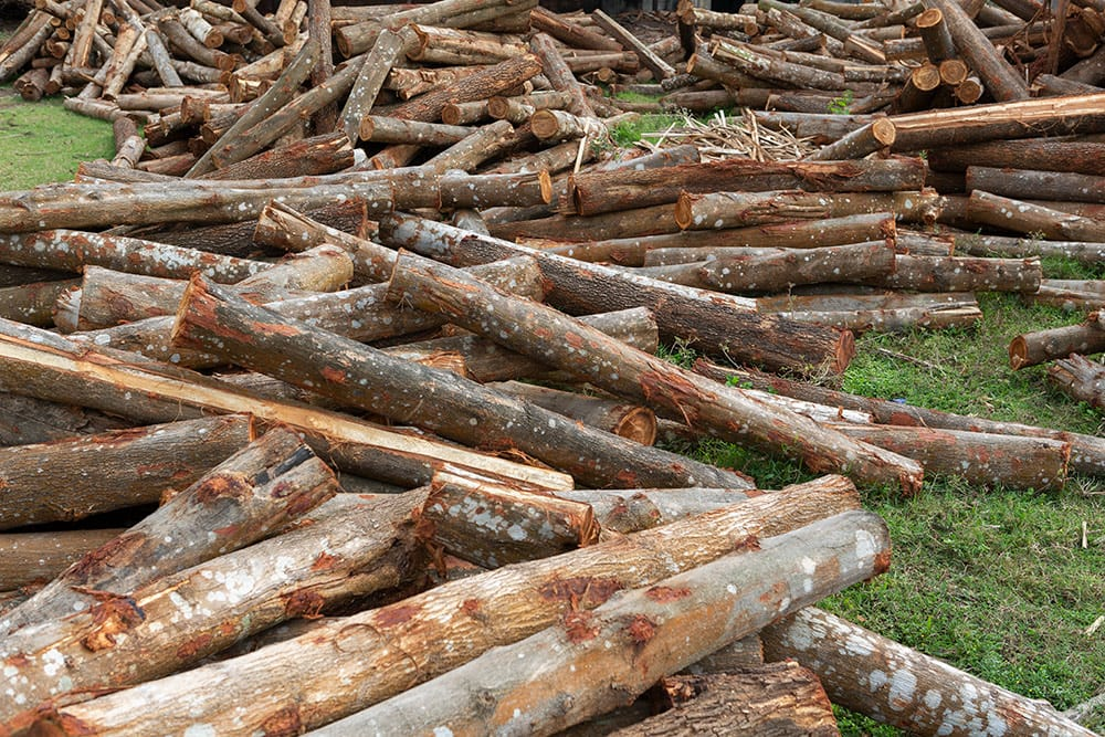 Logs waiting to get processed