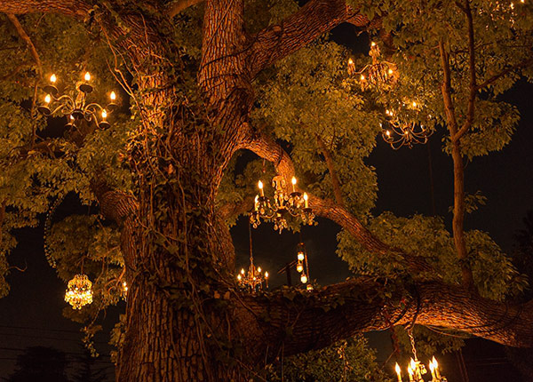 The Chandelier Tree of Silver Lake, Los Angeles