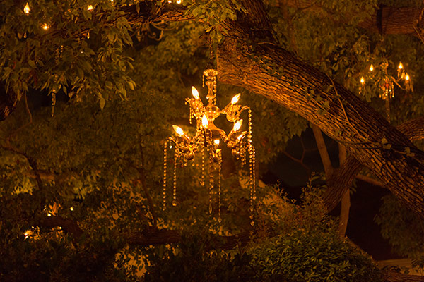 The Chandelier Tree of Silver Lake, Los Angeles - Surfdog