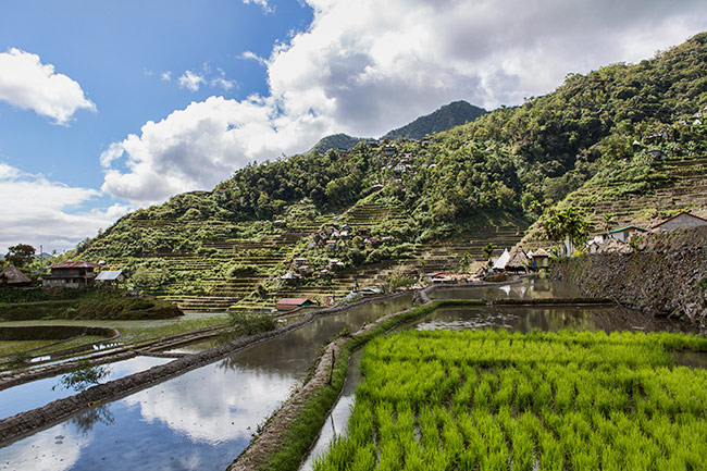 The Batad Rice Terraces - People at Work